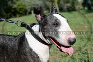 Collare in cuoio combinato per Bull terrier
