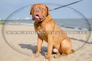Collare in cuoio combinato per Dogue de Bordeaux