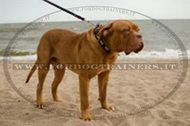Collare in cuoio con borchie ovali per Dogue de Bordeaux