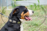 Collare in nylon con piastre decorative per Swiss Mountain Dog