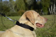 Collare in nylon per Labrador