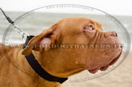Collare regolabile in nylon per Dogue de Bordeaux