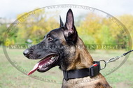 Collare regolabile in nylon per Malinois