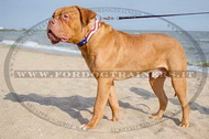 "Collare dipinto ""Bandiera americana"" per Dogue de Bordeaux"