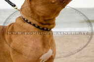 collare con borchie rotonde per Dogue de Bordeaux