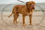 Collare in cuoio con borchie a punta per Dogue de Bordeaux