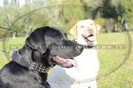Collare in cuoio con borchie decorative per Labrador