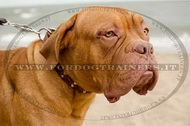 Collare con borchie a semisfera e piramidi per Dogue de Bordeaux