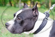 Collare in cuoio C24, 25mm per American Staffordshire Terrier