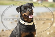 Collare in cuoio con borchie decorative per Rottweiler