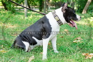 Collare decorativo per American Staffordshire Terrier