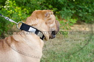 Collare in nylon con piastre decorative per Shar Pei