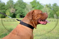 Collare in nylon con maniglia per Dogue de Bordeaux