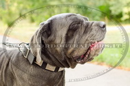 Collare in nylon con piastre decorative per Mastino Napoletano