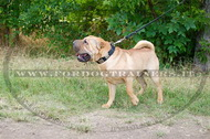 Collare in cuoio con piastre decorative per Shar Pei