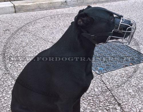 Labrador con museruola a cestello