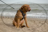 Pettorina in pelle con borchie a piramidi per Dogue de Bordeaux