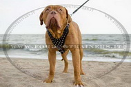 Pettorina in cuoio con borchie a punta per Dogue de Bordeaux