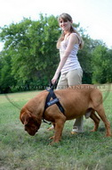 Pettorina in nylon da traino per Dogue de Bordeaux