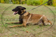 Collare in cuoio con borchie decorative per Malinois