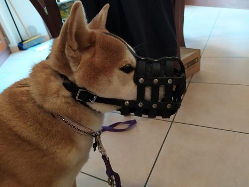 Pettorina sportiva per cane H12